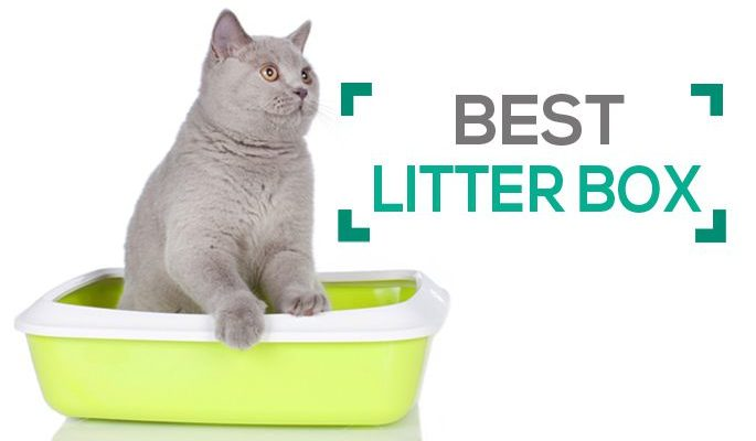 Top 10 Best Litter Boxes with Odor Control, Space & Ease