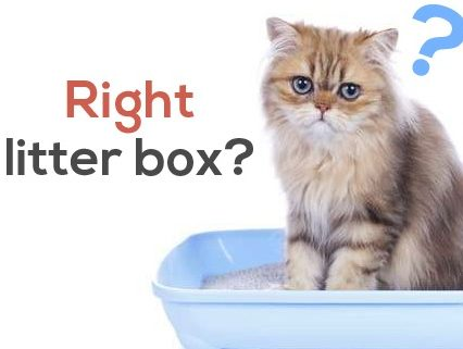 best litter box for cats and dogs